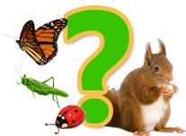 Találós kérdések, állatokról