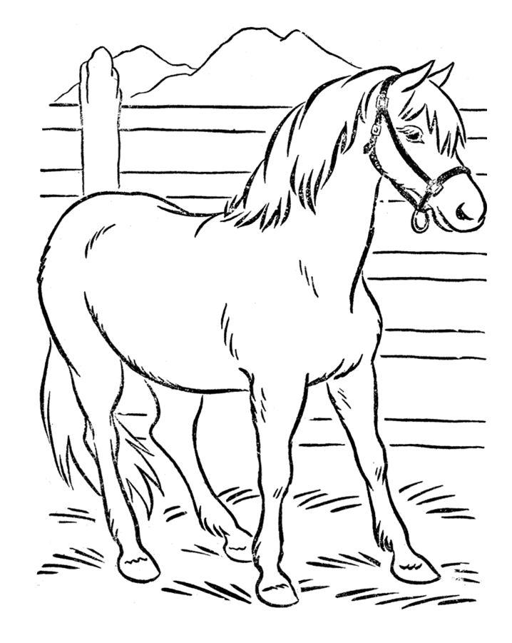 lovas színező